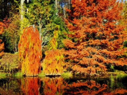 Cox Arboretum in its fall colors