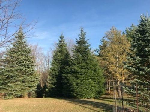 The Draves Arboretum