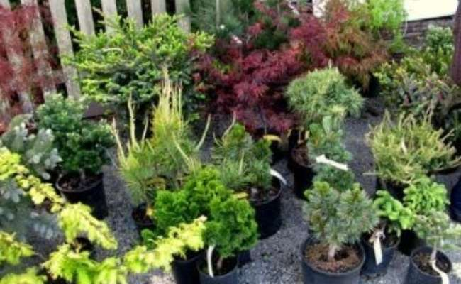 Announcing Nursery Discount Program for ACS Members