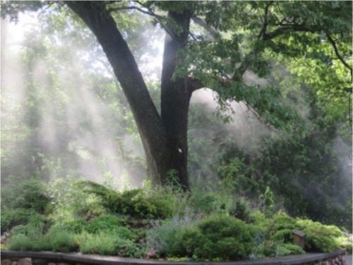 A view of by the Conifer Reference Garden. Photograph by Wellesley College Horticulturist, David Sommers