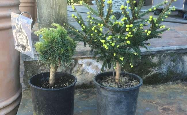 CCOY Plants Shipped