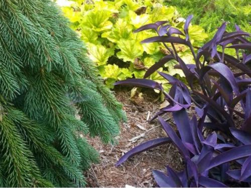 The Harrison Tuttle conifer garden in Raleigh reveal contrasting colors and textures, all working together to create a patchwork harmony
