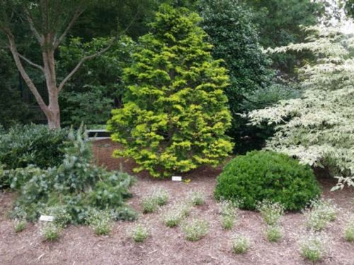 Conifers of varying heights, along with perennials in North Carolina's Unique Garden in Chapel Hill demonstrate a good mix of texture and color in its gardening