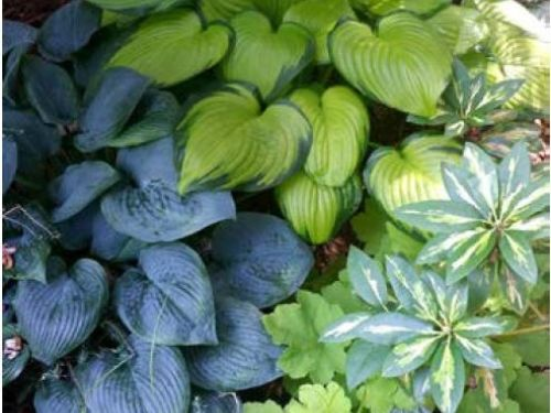A play with gardening colors and texture in The Harrison Tuttle garden in Raleigh