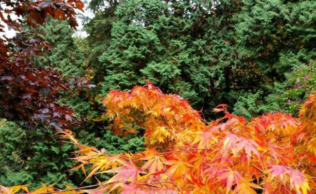Conifer Gardening with Colors and Texture