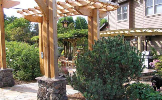 Conifers and Aesthetic Pruning