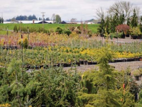 RareTree Nursery in Silverton, Oregon