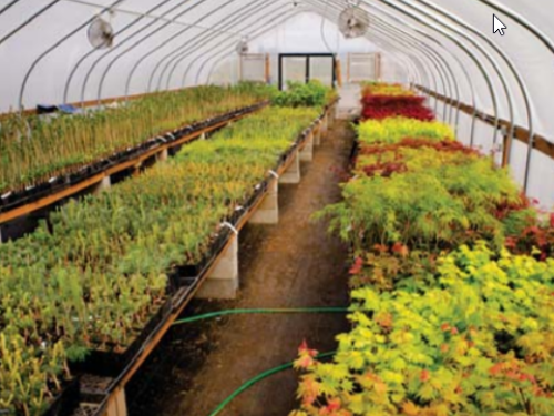 Another view of the RareTree Nursery in Silverton, Oregon