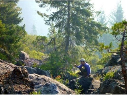 Leah Alcyon looking for Alaskan cedar at Devil's Punchbowl in Northern California