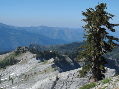 The heart of the Marble Mountain Wilderness is Marble Mountain itself, sprinkled with the rare California-endemic foxtail pine (Pinus balfouriana)