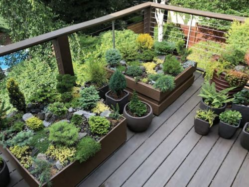 A container gardening deck for conifers