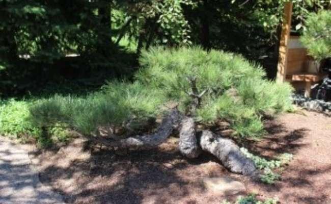 Denver Botanic Gardens Named New ACS Reference Garden