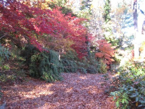 Conifers and maples are a lovely combination in climates where both thrive