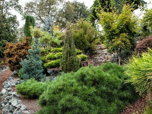 A group of dwarf conifers in the Jordan garden in Oregon displays a dazzling array of texture, form and color