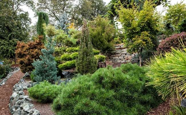 Landscaping with Dwarf Conifers