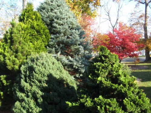 In this shot the conifers display a wide range of hues and textures