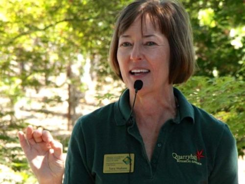 Sara Malone, ACS member, Master Gardener and Quarryhill volunteer led off with a talk on how to use conifers in the garden.