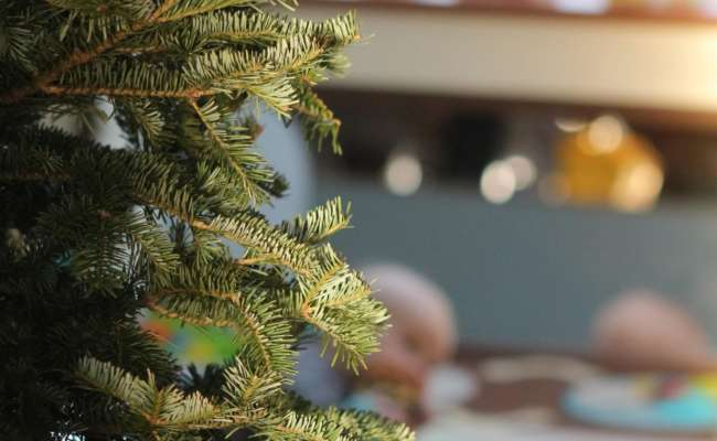 How to Care for Indoor Conifers and Evergreens