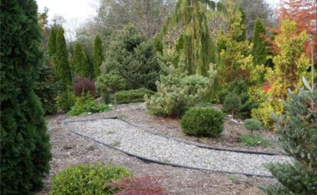 How to Design a Conifer Garden