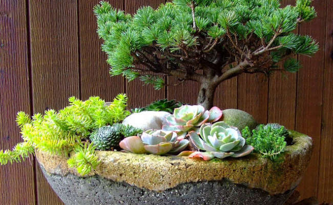 How to Make a Hypertufa Pot for Conifers