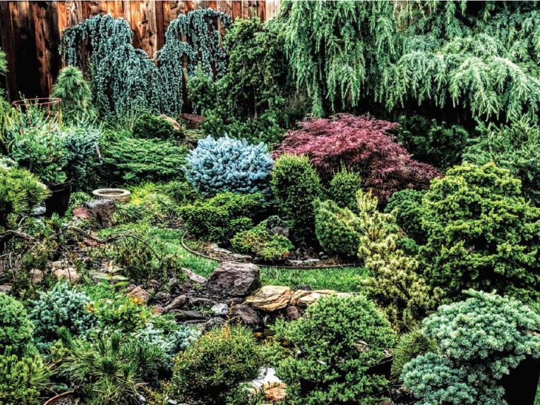 Cedar galore: a panorama of the Christiansen Garden in San Jose, CA