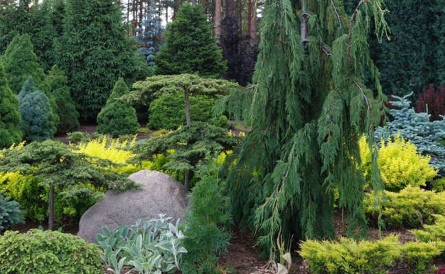 The Importance of Conifer Reference Gardens
