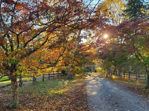 The dogwoods will be in autumn splendor when we meet in September 2020