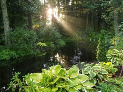Lower hosta garden at O'Brien Nursery