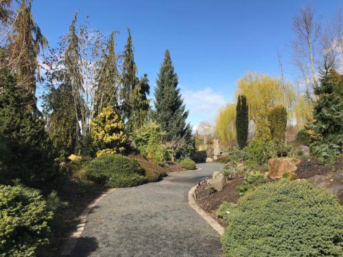 Conifer Garden Picture