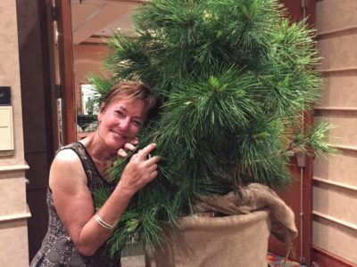 Your website editor falls in love with a pine from Afghanistan