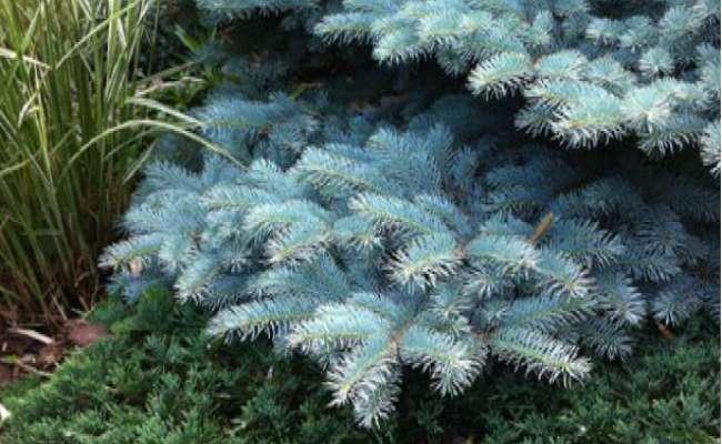 Reimagining Your Conifer Landscape Design