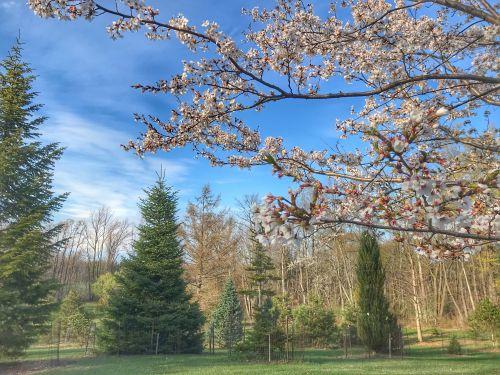 Draves Arboretum in Spring