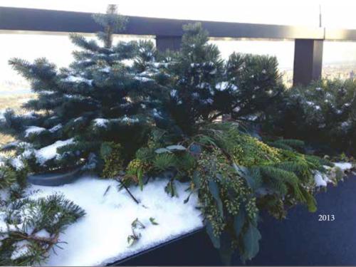 The rooftop Conifer Corner garden in 2013