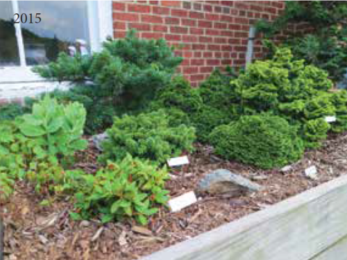 Another view of the Conifer Corner garden atop the Arsenal in 2015