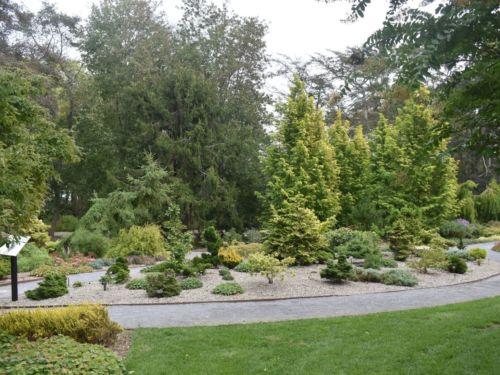 Ed Rezek Dwarf Conifer Garden. Photo by Kevin Wiecks.
