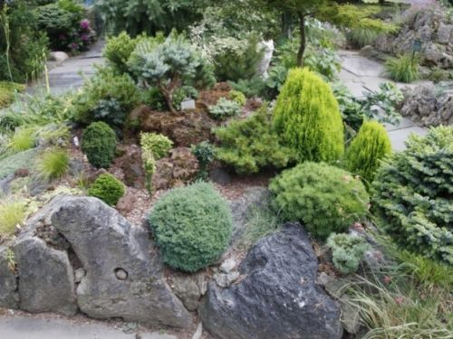 Red and black pumice rock garden displaying miniature and dwarf conifers