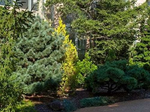 The enchanting Conifer Garden at ABG. Photo: Atlanta Botanical Garden