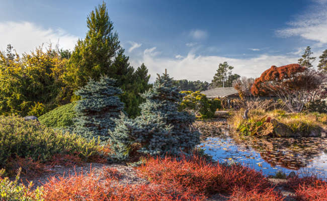 What is a Conifer Reference Garden?