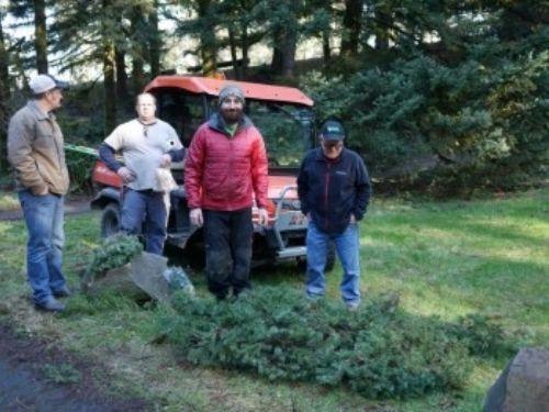 Martin Nicholson, Nathan Miller, Damien Carré and Doug Wilson, admiring the broom in the Pseudotsuga menziesii (Douglas-fir).