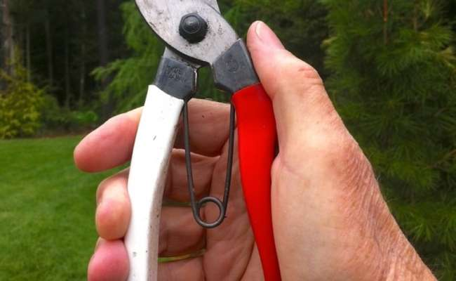 Zen and the Art of Pruning